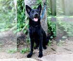 Small #18 German Shepherd Dog Mix