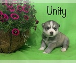 Image preview for Ad Listing. Nickname: Unity