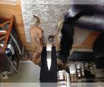 Small #694 German Shepherd Dog