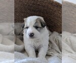 Small #54 Great Pyrenees