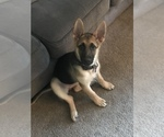 Small #12 German Shepherd Dog