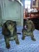 Dachshund Puppy For Sale in GARDEN GROVE, CA