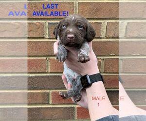 German Shorthaired Pointer Puppy for sale in MARIETTA, GA, USA