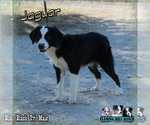 Image preview for Ad Listing. Nickname: Jaguar