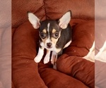 Puppy 3 Rat-Cha