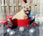 Image preview for Ad Listing. Nickname: Pumba
