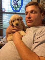 Golden Retriever Puppy For Sale in SAN ANTONIO, TX, USA