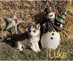 Image preview for Ad Listing. Nickname: Luke