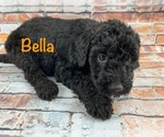 Image preview for Ad Listing. Nickname: Puppy #6 Bella