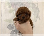 Image preview for Ad Listing. Nickname: Teddy