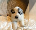 Small #15 Great Pyrenees