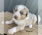 Image preview for Ad Listing. Nickname: Shania