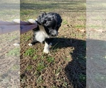 Small #5 Portuguese Water Dog