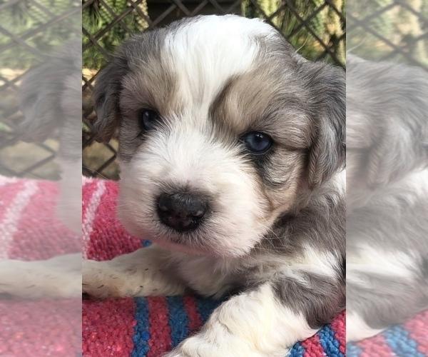View Ad Bichon Frise Litter Of Puppies For Sale Near California Montecito Usa Adn 165294