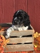English Springer Spaniels European Bench