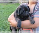 Puppy 7 Jug