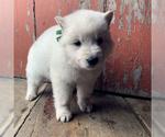 Small #57 German Shepherd Dog