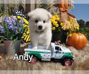 American Eskimo Dog Puppy for sale in SHIPPENSBURG, PA, USA