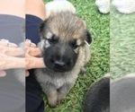 Small #17 German Shepherd Dog