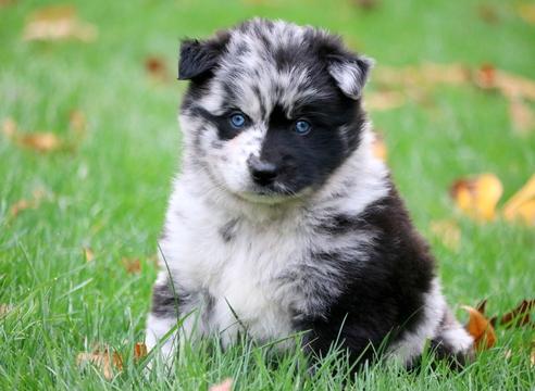 Dogs For Sale Ukraine