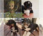 Image preview for Ad Listing. Nickname: Groot
