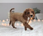 Small #6 Cavapoo