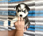 Image preview for Ad Listing. Nickname: Litter of 5