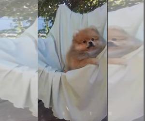Puppies for Sale near 77047, USA, Page 6 (10 per page) - Puppyfinder com