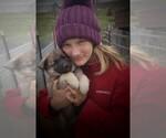 Small #5 Norwegian Elkhound
