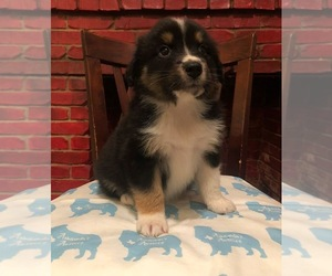 Puppies for Sale near Greenville, Texas, USA, Page 1 (10 per page