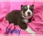 Image preview for Ad Listing. Nickname: Daisy