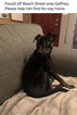 Miniature Pinscher-Unknown Mix Dog For Adoption in GAFFNEY, SC, USA