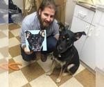 Small #5 German Shepherd Dog-Labrador Retriever Mix