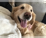 Sweet Loving Companion for a Great Family
