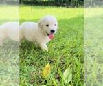 Small #6 Golden Retriever