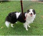 Small #10 Border Collie Mix
