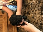 German Shepherd Dog Puppy For Sale in ALBUQUERQUE, NM, USA