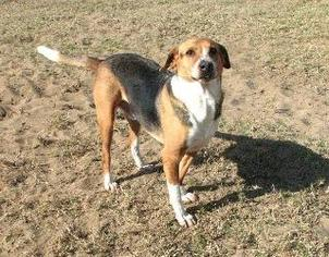 Sport - Hound Dog For Adoption