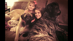 Mastiff Puppy For Sale in ASHEBORO, NC, USA