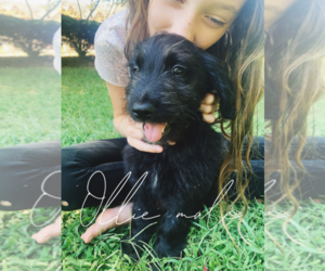Puppies for Sale in South Carolina, USA, Page 1 (10 per page