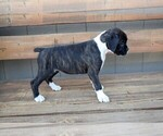 Small #13 Boxer