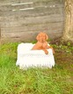 Vizsla Puppy For Sale in CLEMENTS, Maryland,