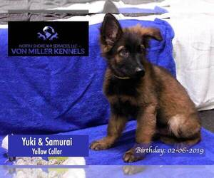German Shepherd Dog Puppy for sale in MUNDELEIN, IL, USA