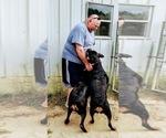Small #102 Rottweiler