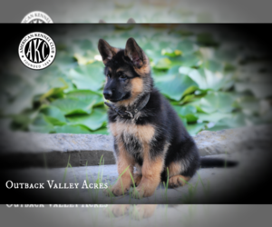 German Shepherd Dog Puppy for Sale in LISBON, Ohio USA