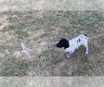 Puppy 9 Freckles