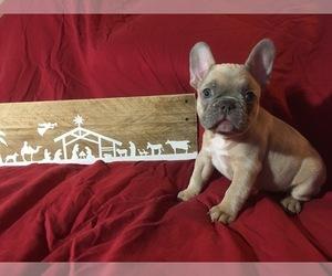 French Bulldog Puppy for Sale in GIRARD, Illinois USA