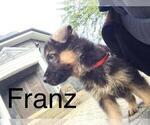 Small #36 German Shepherd Dog