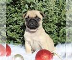 Small #4 Pug