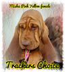 Bloodhound Puppy For Sale in WALDRON, AR,